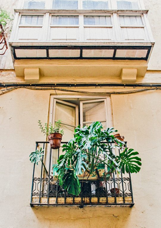 architecture-balcony-big-leaf-1066727